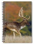 130201p289 Spiral Notebook