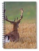 130201p294 Spiral Notebook