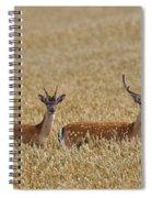 130201p299 Spiral Notebook