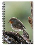 130215p300 Spiral Notebook