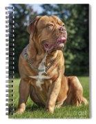 130918p005 Spiral Notebook