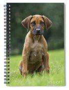 130918p305 Spiral Notebook