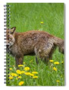 131018p150 Spiral Notebook