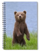 131018p233 Spiral Notebook