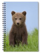 131018p243 Spiral Notebook