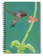 Annas Hummingbird Spiral Notebook