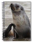 Antarctic Fur Seal Spiral Notebook