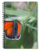 14 Balkan Copper Butterfly Spiral Notebook