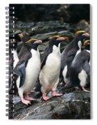 Macaroni Penguin Spiral Notebook