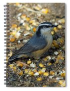 Nuthatch Spiral Notebook