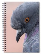 Rock Dove Spiral Notebook