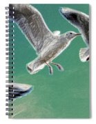 10760 Seagulls In Flight #001 Photo Painting Spiral Notebook