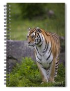 Siberian Tiger, China Spiral Notebook
