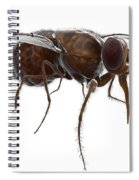Tsetse Fly Spiral Notebook