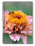Zinnia From The Candy Mix Spiral Notebook