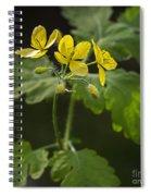 140420p133 Spiral Notebook