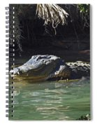 American Alligator  Spiral Notebook