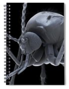 Anopheles Mosquito Spiral Notebook