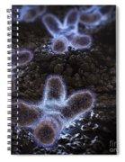Human Chromosomes Spiral Notebook