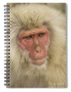 Snow Monkey, Japan Spiral Notebook