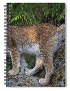 150112p328 Spiral Notebook