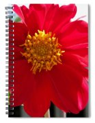 Dahlia From The Showpiece Mix Spiral Notebook