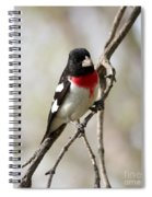 Rose Breasted Grosbeak Spiral Notebook