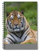 Siberian Tiger, China Spiral Notebook