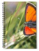 17 Balkan Copper Butterfly Spiral Notebook