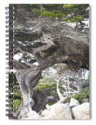 17 Mile Drive Tree Spiral Notebook