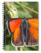 18 Balkan Copper Butterfly Spiral Notebook