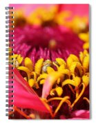Zinnia From The Whirlygig Mix Spiral Notebook