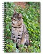 Cat In Hydra Island Spiral Notebook