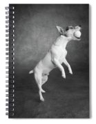 Portrait Of A Jack Russell Terrier Dog Spiral Notebook