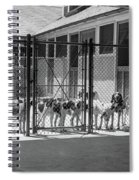1930s Kennel Yard Full Of Foxhound Dogs Spiral Notebook