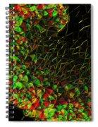 1997045 Spiral Notebook