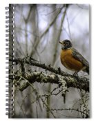 1st Robin Of Spring Spiral Notebook