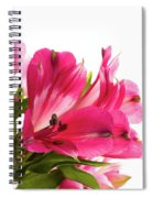 Alstroemeria Flowers Against White Spiral Notebook