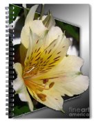 Alstroemeria Named Marilene Staprilene Spiral Notebook
