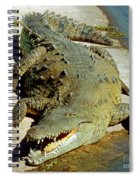 American Crocodile Spiral Notebook