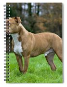 American Staffordshire Terrier Spiral Notebook