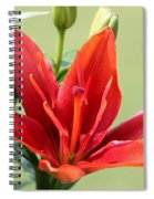 Asiatic Lily Named Red Twin Spiral Notebook