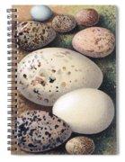 Assorted Birds Eggs, Historical Art Spiral Notebook