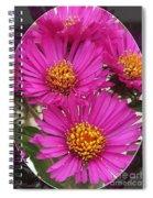 Aster Named September Ruby Spiral Notebook