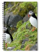 Atlantic Puffin, Fratercula Arctica Spiral Notebook