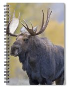 Autumn Bull Moose IIi Spiral Notebook