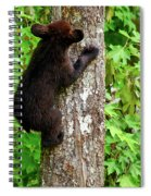 Baby Bear Spiral Notebook