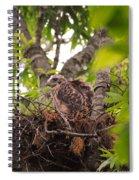 Baby Red Shouldered Hawk In Nest Spiral Notebook
