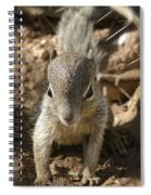 Baby Rock Squirrel Spiral Notebook