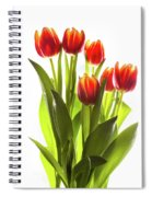Backlit Tulip Flowers Against White Spiral Notebook